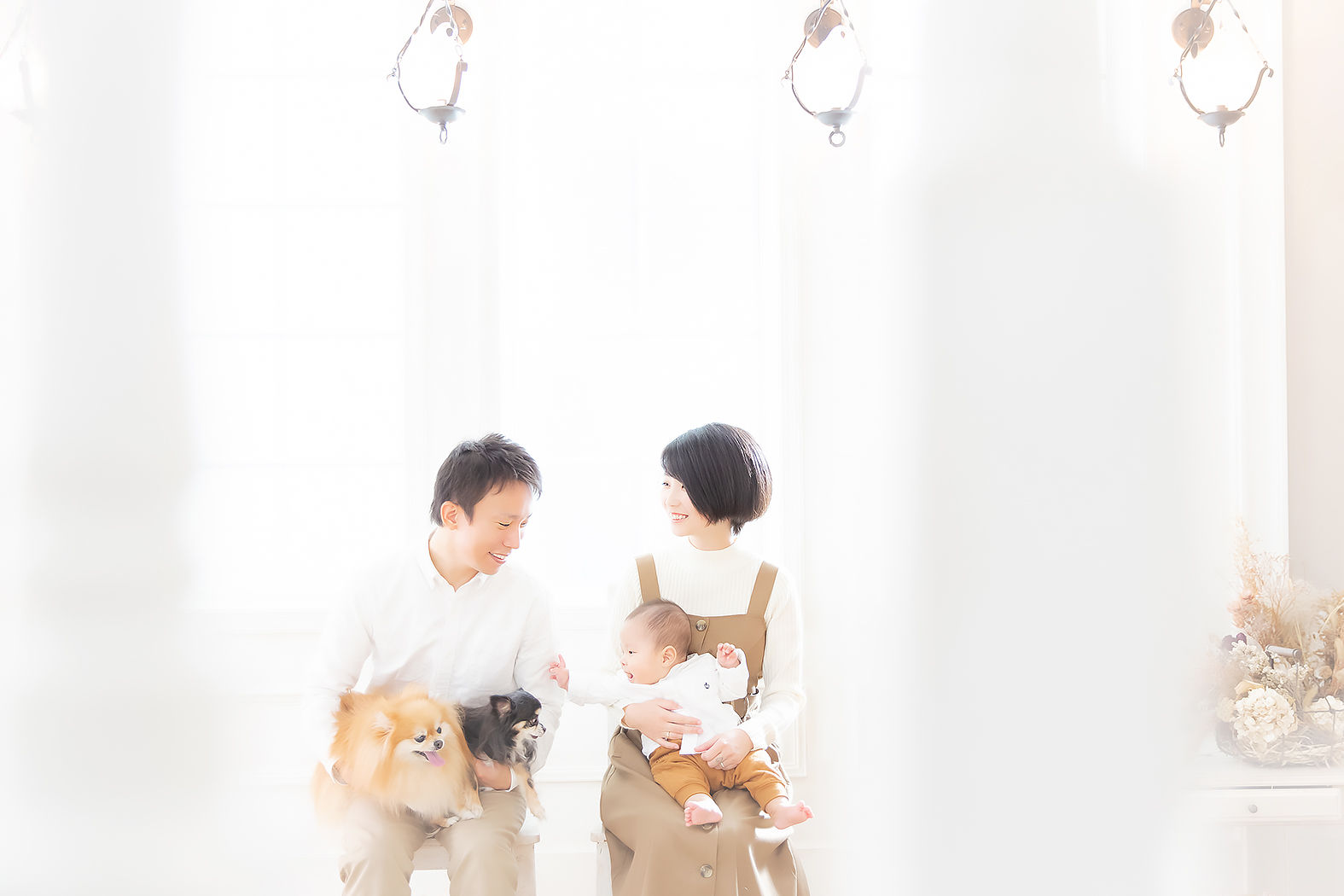 家族写真,ハーフバースデー,わんちゃん,チワワ,ポメラニアン